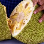 5 Best Jackfruit Recipes for a Healthy Meal
